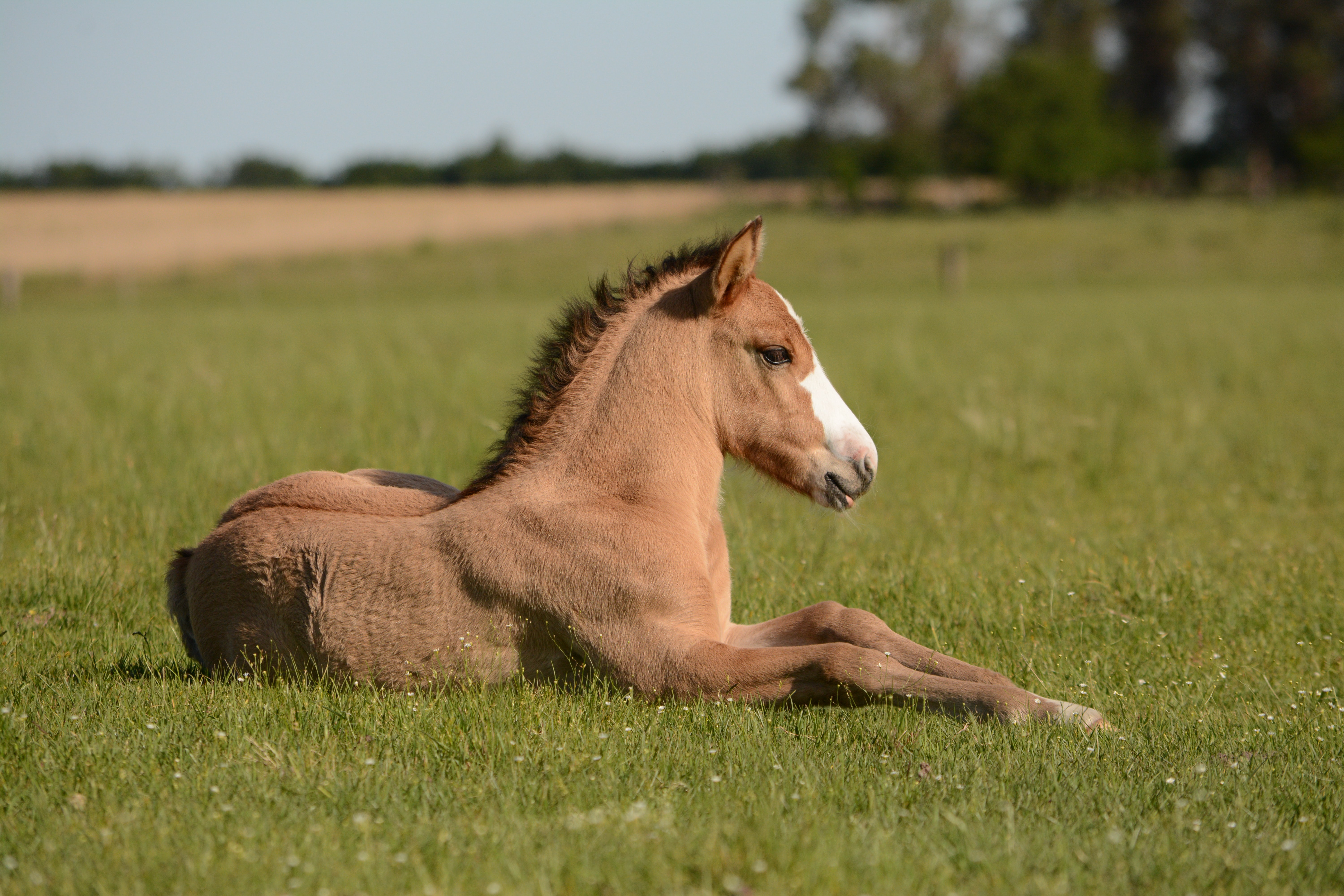 Small horse in grass