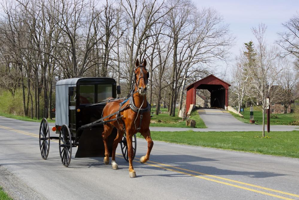 Amish Horse and carriage in Pennsylvania Dutch country